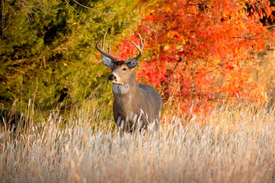 Archery and crossbow season begins Sept. 12. Check the DNR website for a full list of upcoming season dates.  - Photo credit: Photo Credit: iStock/Ricardo Reitmeyer