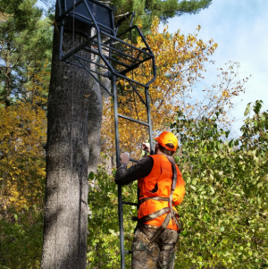 Hunter wearing a full-body harness climbs a treestand. - Photo credit: DNR