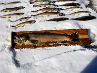 http://www.dnr.state.wi.us/images/news/mediakits/MK_Runoff_deadfish.JPG