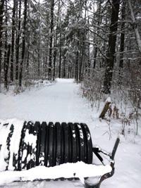 Afterhours Ski Trail