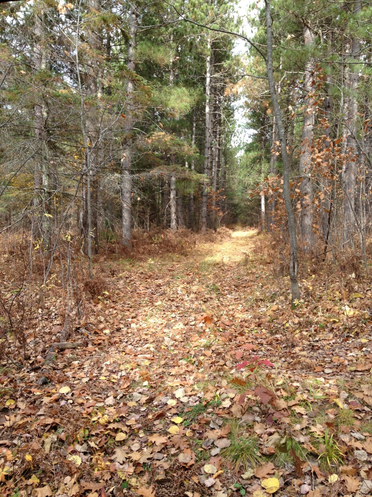 Afterhours trail, Brule River State Forest