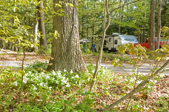 Trilliums are in bloom this week near the campground at Potawatomi State Park