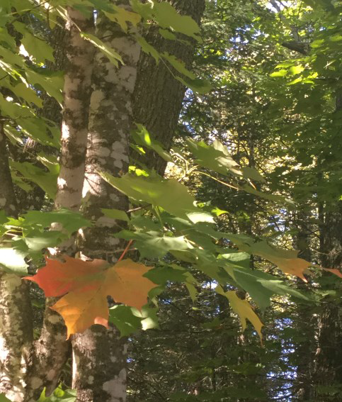 Fall color is just beginning at the Brule River State Forest.