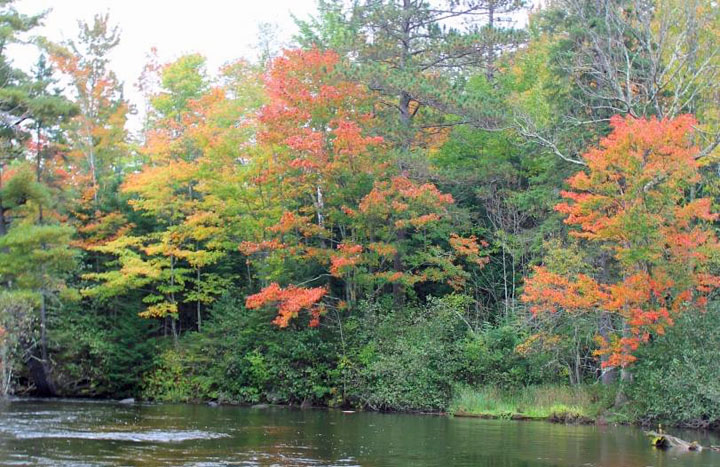 Fall colors at the Brule River State Forest