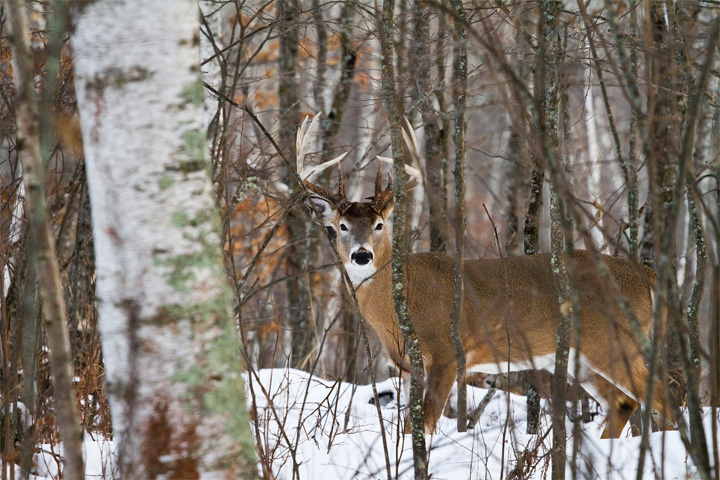 Wisconsin's nine-day gun deer season opens Saturday with a possibility that hunters in far northern Wisconsin will see some snow.<