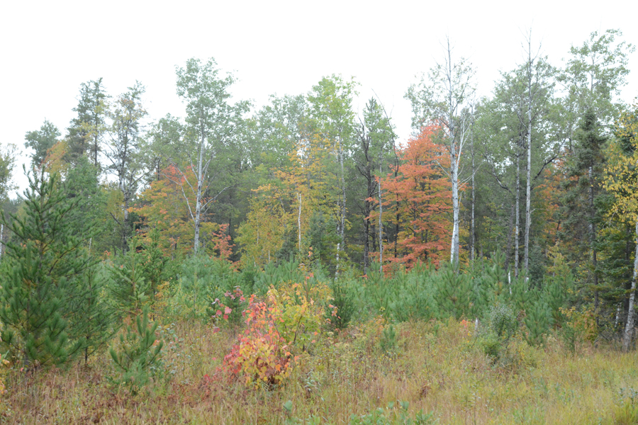 Fall color is nearing 50 percent across much of nothern Wisconsin. - Photo credit: DNR