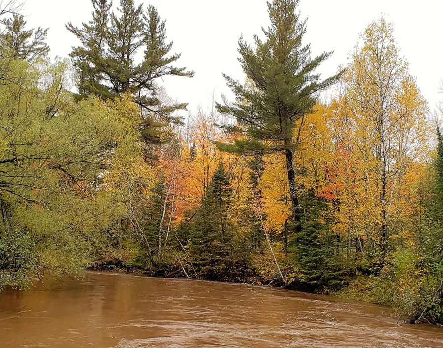 Fall color on the Bois Brule River. - Photo credit: DNR