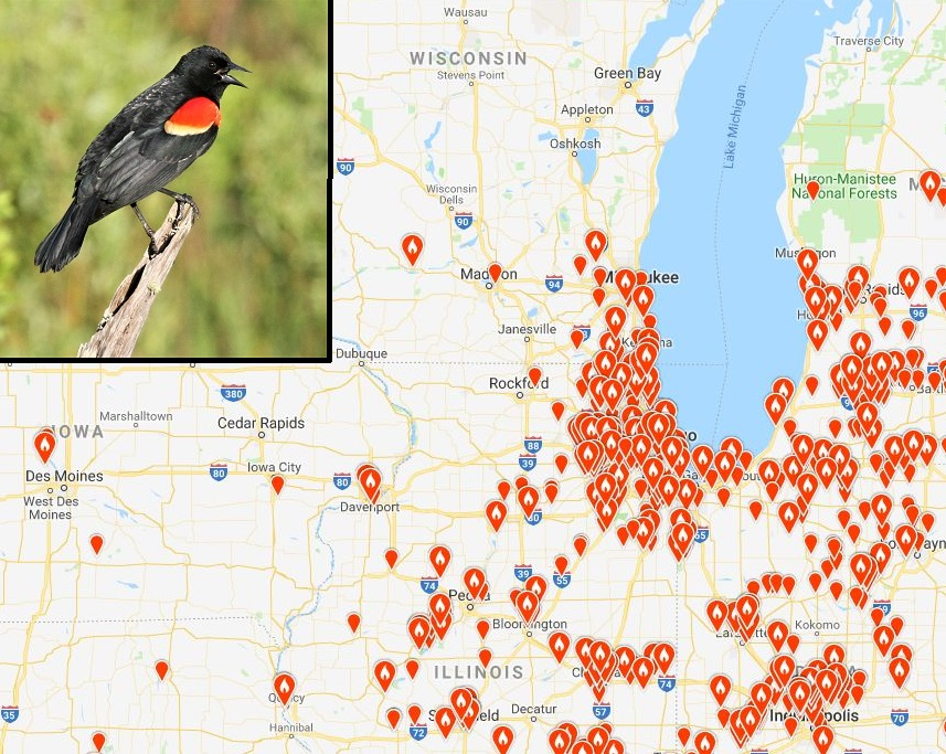 This eBird map for March shows the first red-winged blackbirds have arrived to far southeastern Wisconsin, and more are expected across most southern counties throughout the milder week ahead.  - Photo credit: Map courtesy of eBird, photo by Ryan Brady.