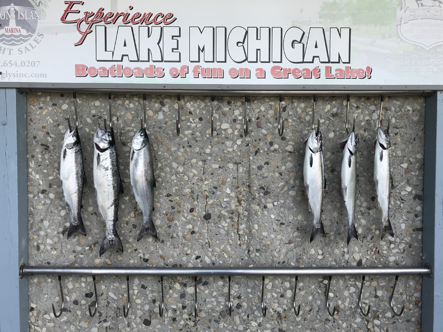 Coho salmon fishing is picking up our of Racine and Kenosha. - Photo credit: Andrew Krecak