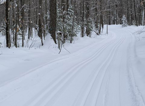 Cross-country ski trails are being groomed at northern state forests and parks. Madeline Ski Trail - Northern Highland-American Legion State Forest - Photo credit: Sara Pearson
