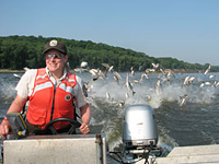 Vibrations from passing motorboats lead silver carp to try and escape by leaping out of the water. © Chris Olds, USFWS