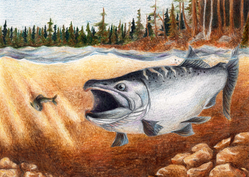 2018 Great Lakes Salmon/Trout Stamp