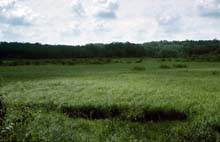 Southern Sedge Meadow