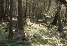Northern Wet-mesic Forest