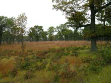 Oak Barrens