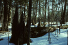Northern Mesic Forest Photo