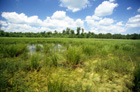 Coastal Plain Marsh Photo