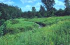 Calcareous Fen Photo