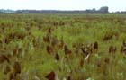 Wet-mesic Prairie Photo