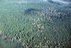 Northern Wet-mesic Forest Photo