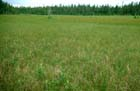 Boreal Rich Fen Photo