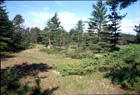 Great Lakes Barrens Photo
