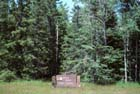 Boreal Forest Photo