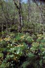 Hardwood Swamp Photo