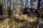 Northern Tamarack Swamp Photo