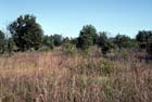 Oak Barrens Photo