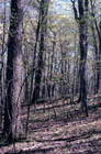 Southern Dry-mesic Forest Photo