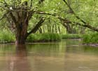 Floodplain Forest Photo