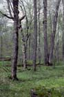 Southern Mesic Forest Photo
