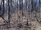Southern Dry Forest Photo