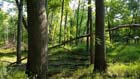 Southern Hardwood Swamp Photo