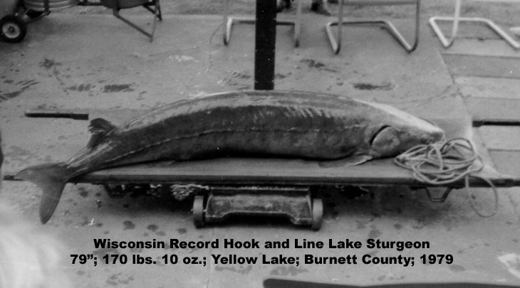 Lake sturgeon fact sheet fishing wisconsin dnr for Wisconsin dnr fishing report