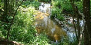 photo of Little Plover River
