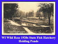Wild Rose Fish Hatchery 1920