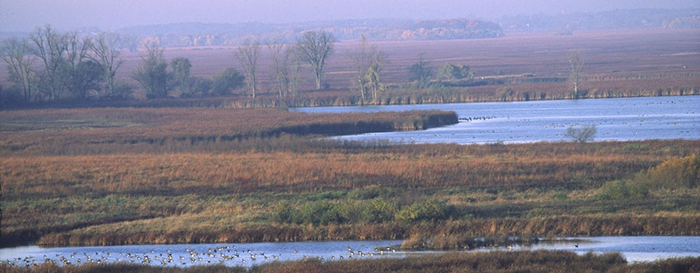 Horicon Marsh Wildlife Area
