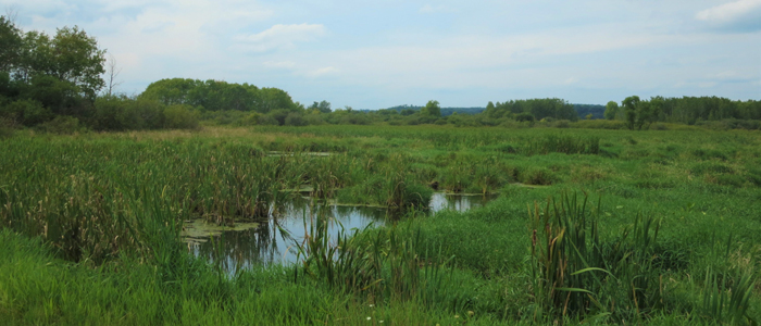 Liberty Creek Wildlife Area