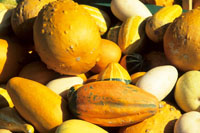 Seasonal gourds