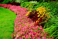 Pink and yellow flowers along a manicured lawn