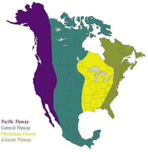 map of flyway areas