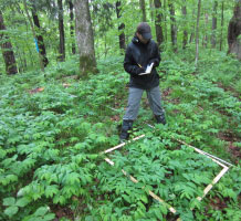 Staff collecting plot level vegetation data