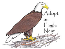 Adopt an eagle nest graphic