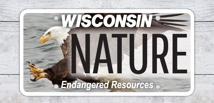 Endangered Resources License Plate - Photo credit: DNR