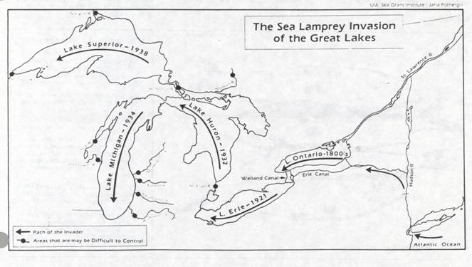 sea lamprey the invaders of the great lakes Although the number of sea lamprey in the great lakes has been reduced integrated management of sea lampreys in the great lakes 2006.