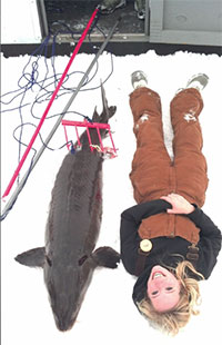 Fishing wisconsin lake winnebago sturgeon spearing for Wisconsin dnr fishing report