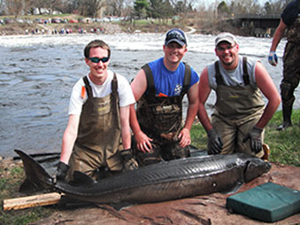 UWSP students with large sturgeon