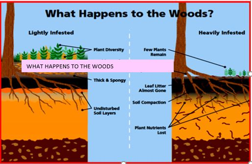 Jumping worms effect on woods